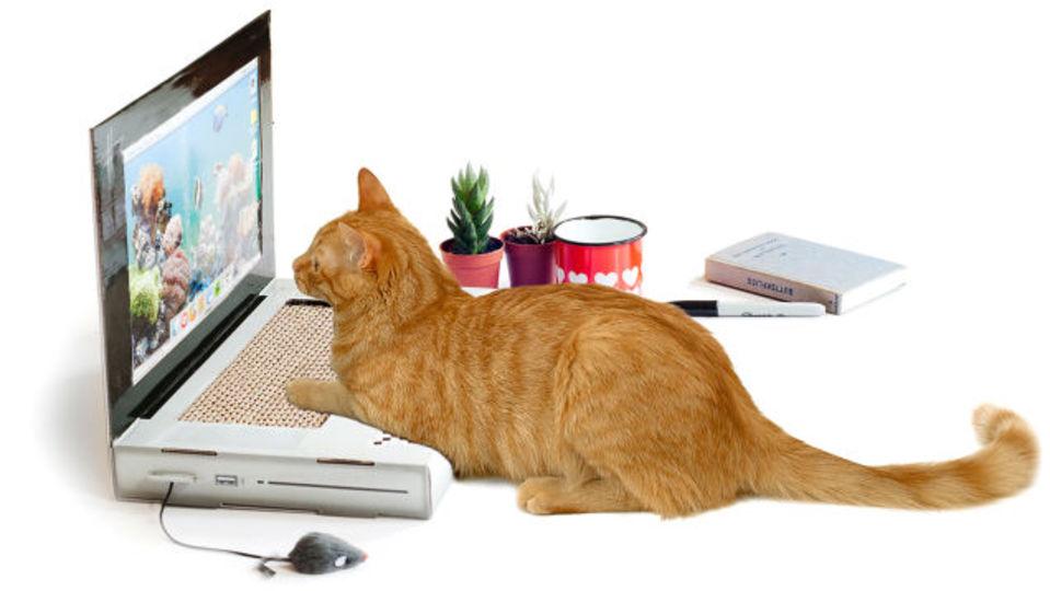 ニャンだこれ? ネコ専用ノートPCが発売中…