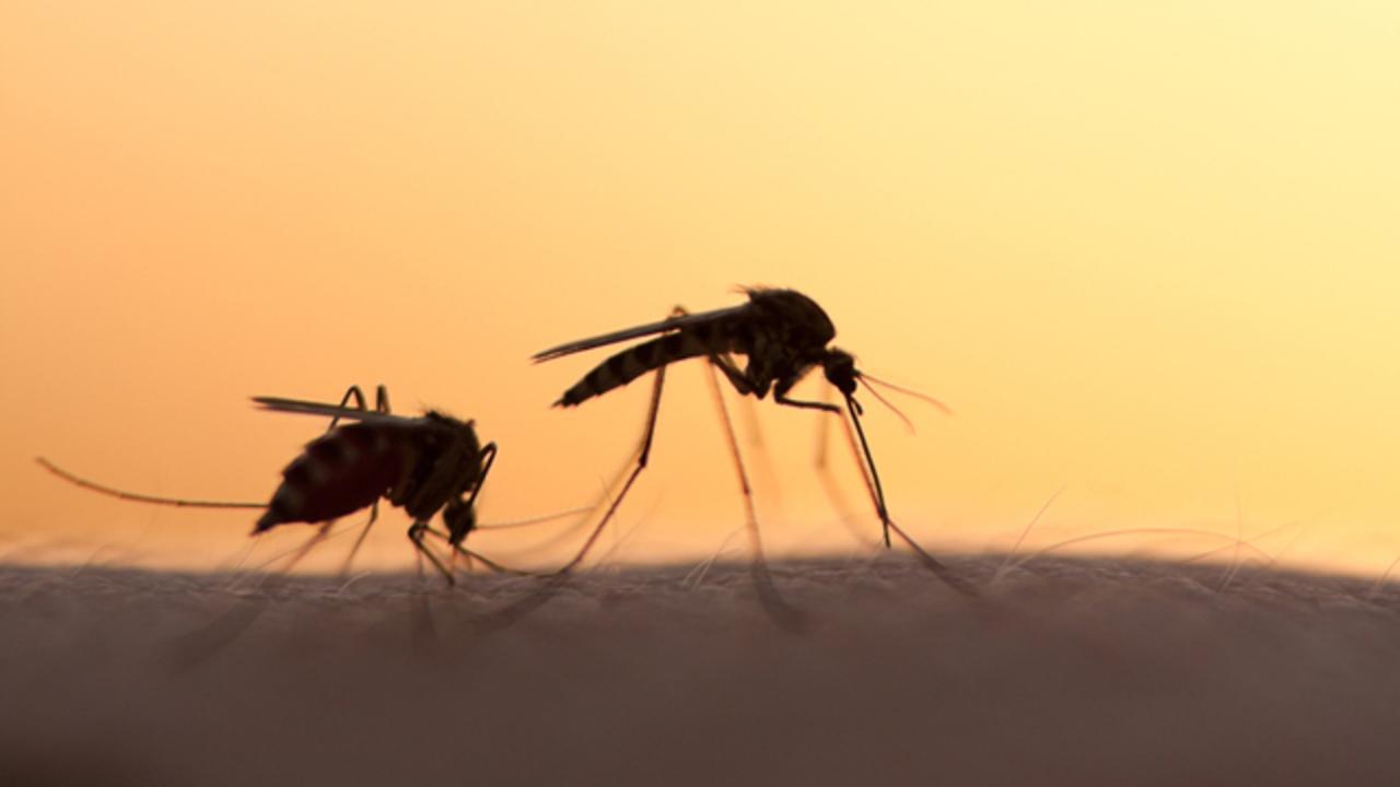 夏の大敵、蚊を撃退するシャツがスペインで開発される
