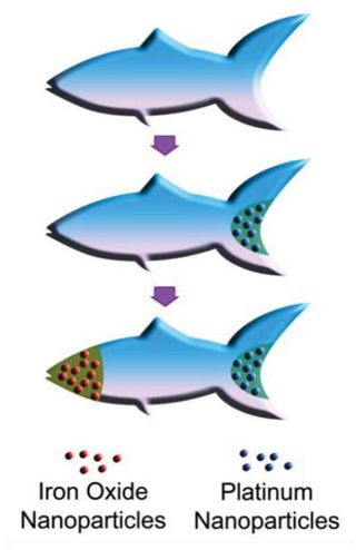 150904_microfish02.jpg