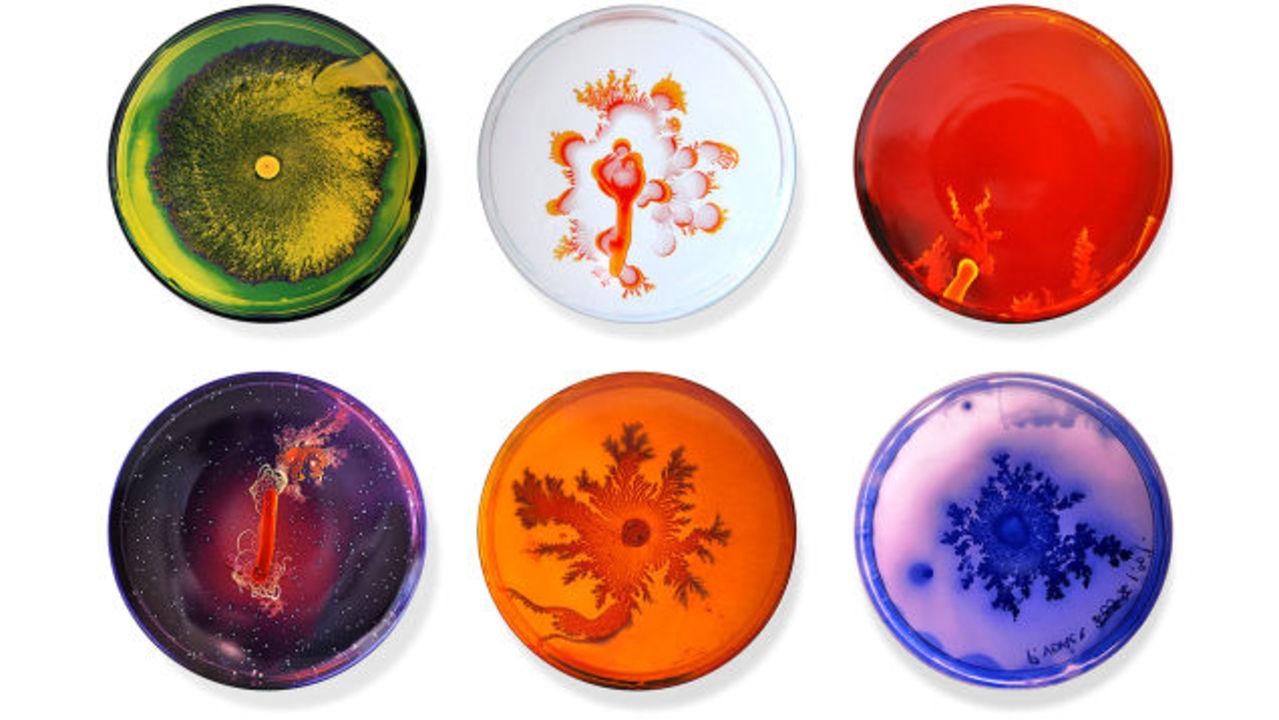 MoMAでも販売中。絵皿に描かれたカラフルなフラクタル模様の正体は…