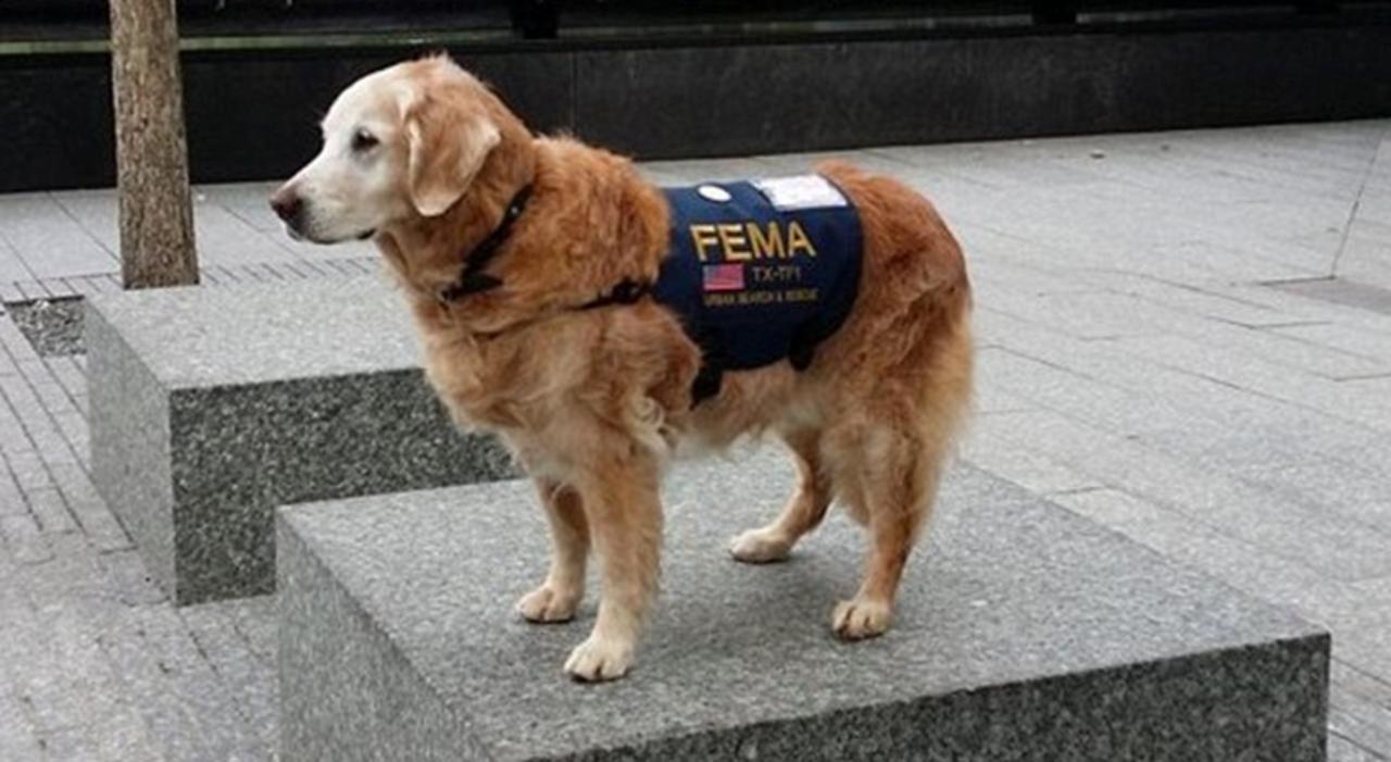 911テロで活躍したレスキュー犬に最高のお誕生日を!