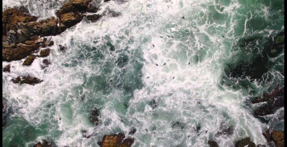 まるで動く絵画…鳥になって海を見ていよう