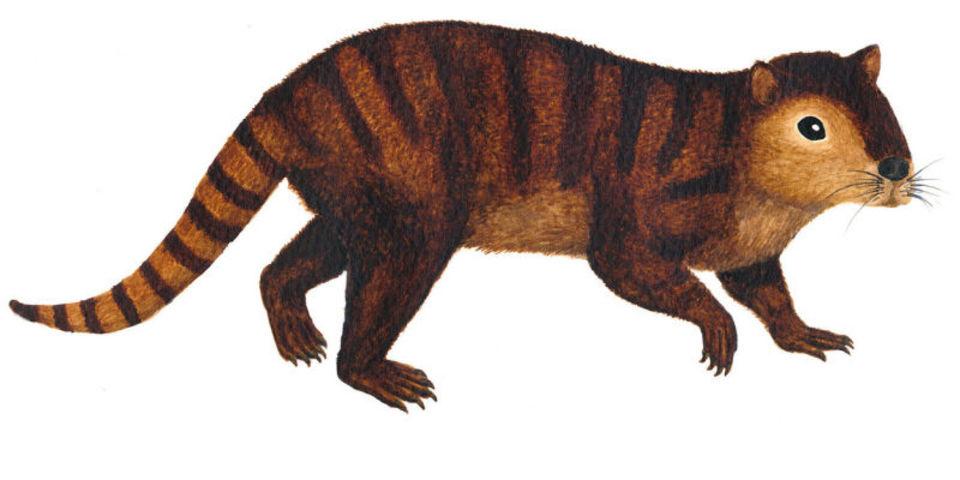 恐竜が絶滅したあとの哺乳類を繁栄させた立役者