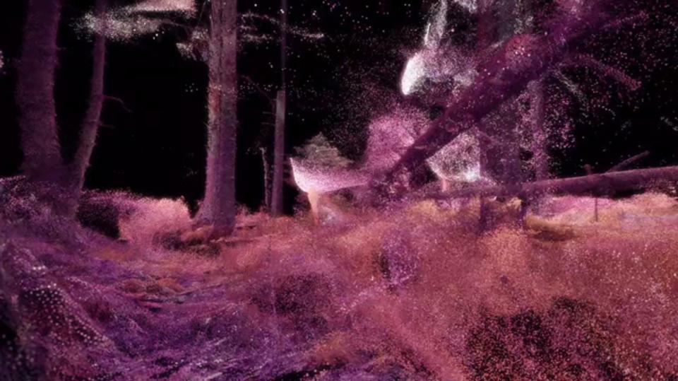 虫や動物には世界がどう見えているの? 森の中でVR体験できます