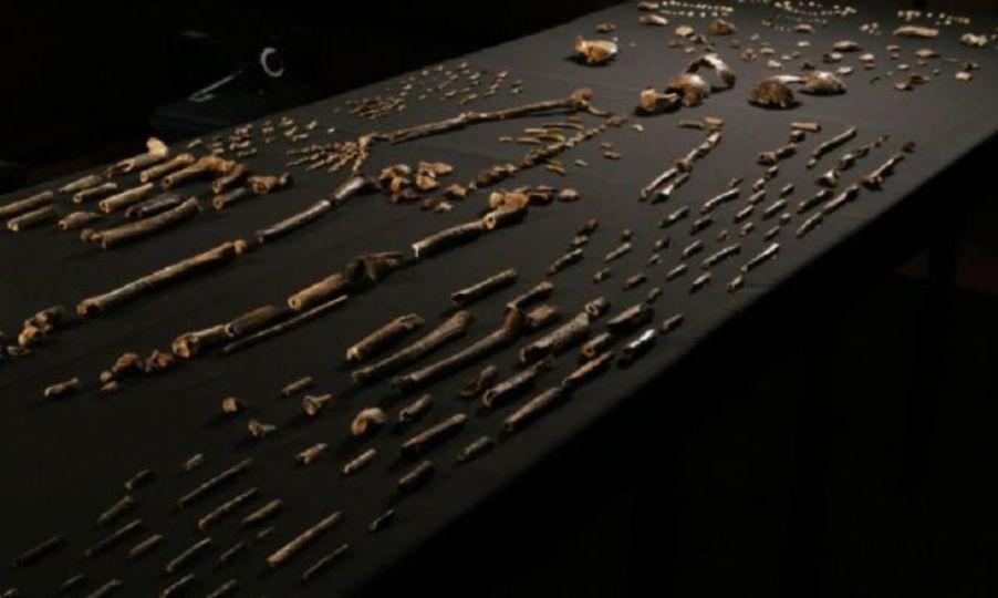 「新種のヒト発見」は間違い? 原始人類学界で議論沸騰中