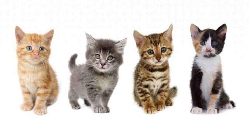 10月29日、今日は猫の日! Uberが動く猫カフェ「UberKITTENS」を開催