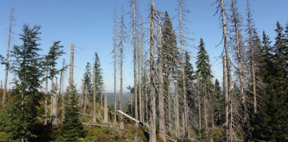 北米の森に、酸性雨から回復の兆し