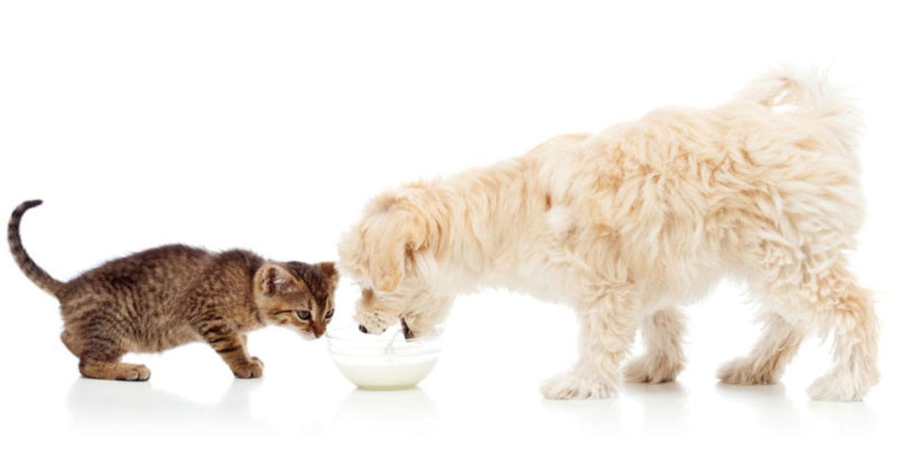 猫の味覚。にゃんこたちは、犬よりも「苦み」に敏感