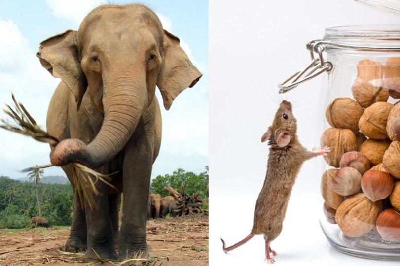 ネズミの精子はなぜゾウのより大きい?