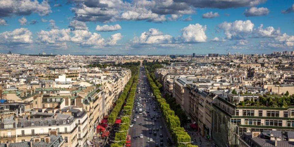 都会にある木は、本当に空気をキレイにするの?