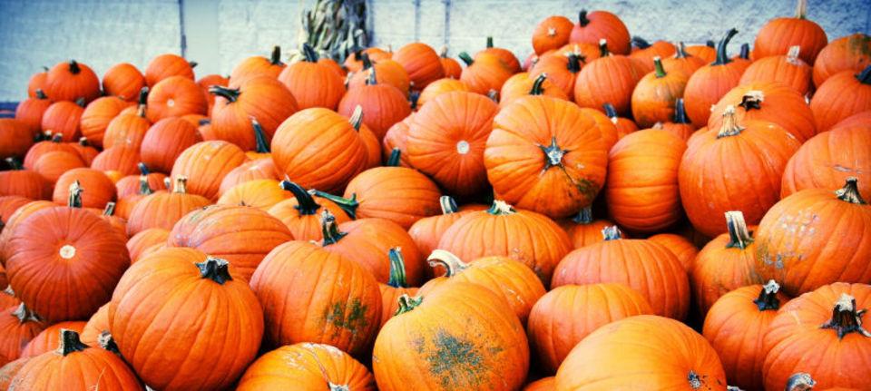 昔々、かぼちゃを絶滅の危機から救ったのは、人類でした