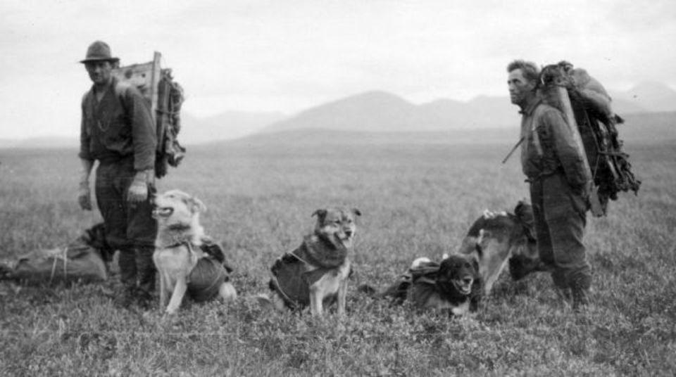 1920年代、地質学者たちとアラスカを旅したワンコたち