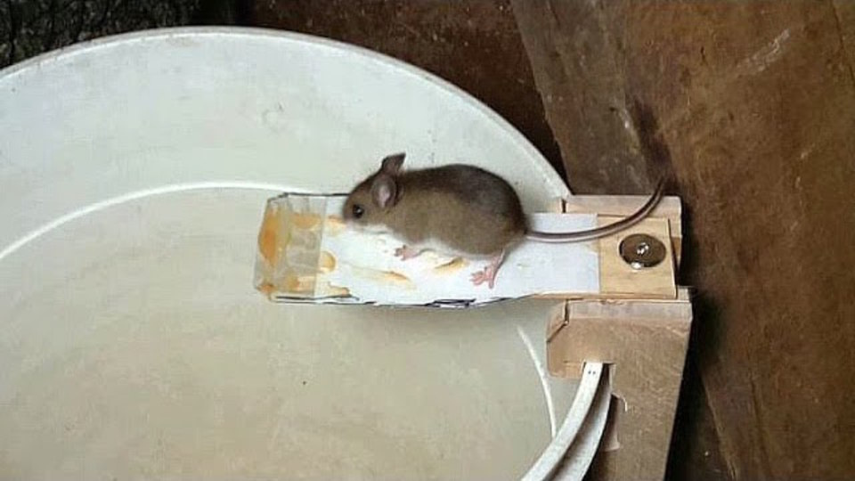 Dog And Cat Safe Rat Poison