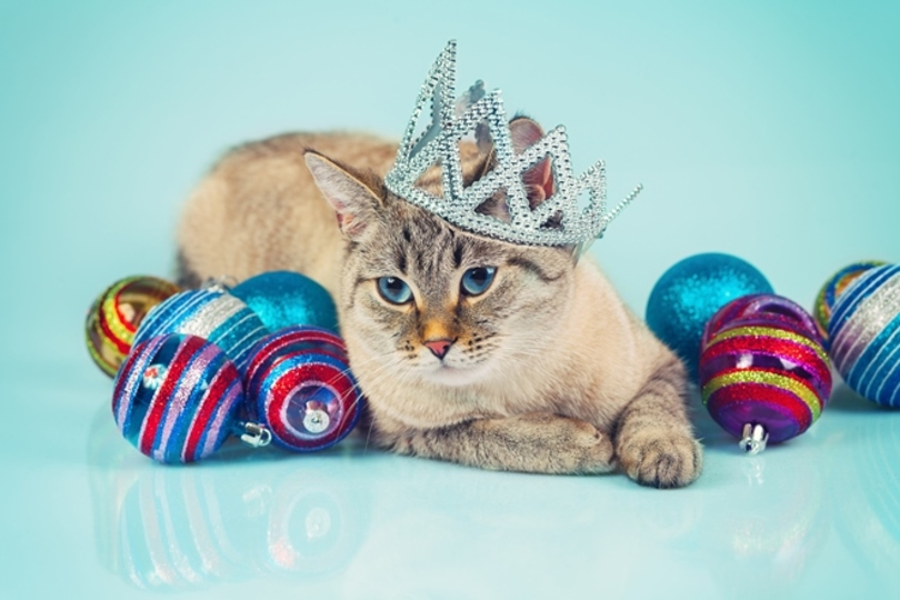 Instagramはやっぱり#猫、2015年の人気タグ