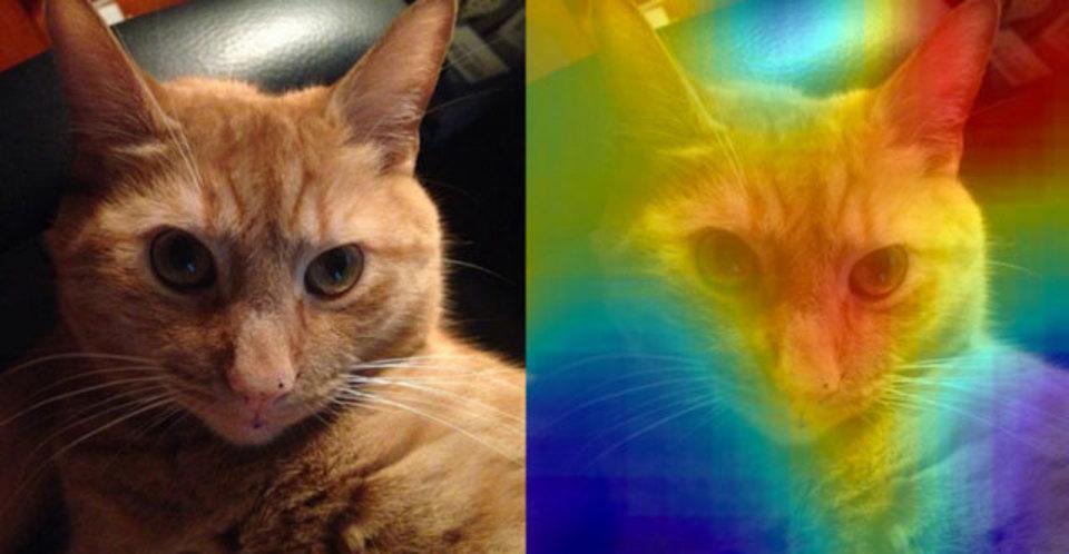 猫は右耳!? MITのディープラーニング研究から開発されたアルゴリズムMemNet。記憶に残る画像はどんな画像?