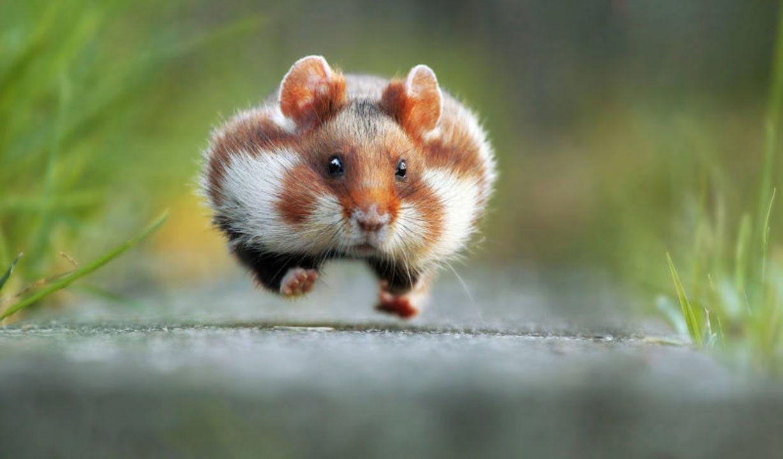 すごく可愛いですよ…野生動物のお茶目な瞬間を集めたコンテスト作品集