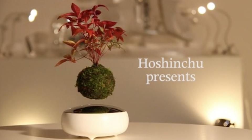 ラピュタはあった!? 宙に浮く盆栽「Air Bonsai」がプロジェクト開始