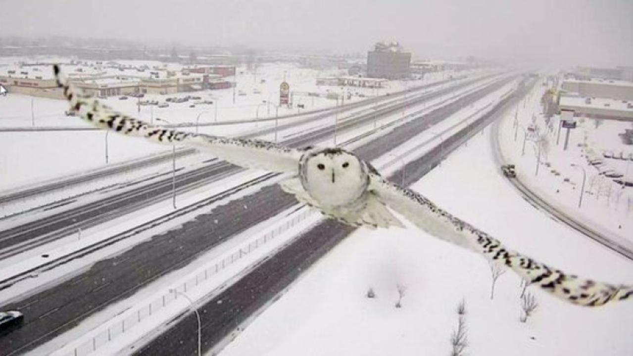 監視カメラにバッチリ写り込んだ完璧なフクロウさん
