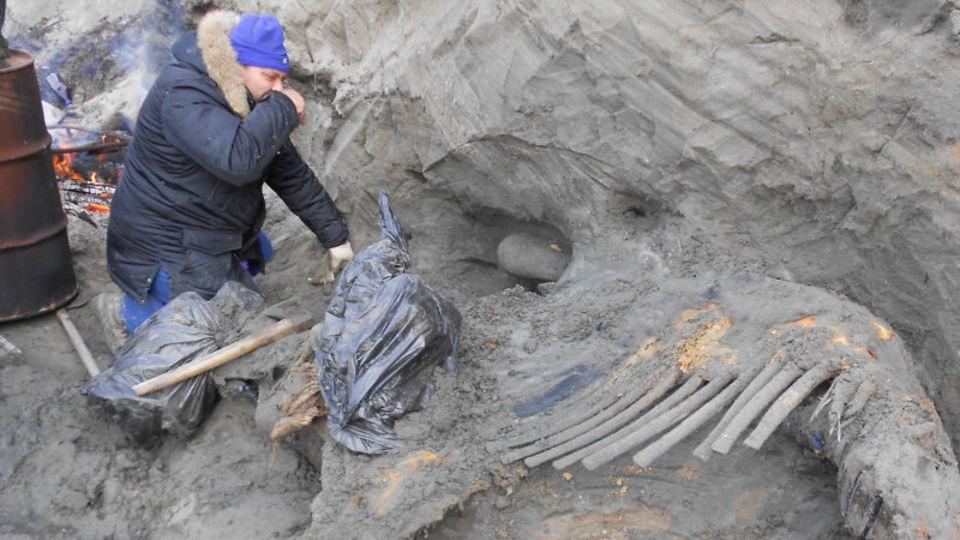 約4万5千年前のマンモスの骨発見で、人類の歴史が変わるかも