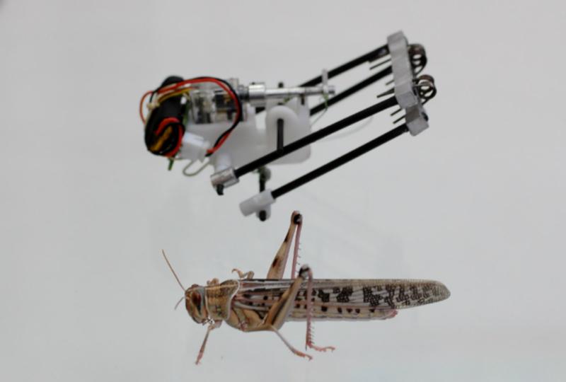 バッタ・ロボットが被災地を飛び跳ねる!3mのジャンプで人命救助