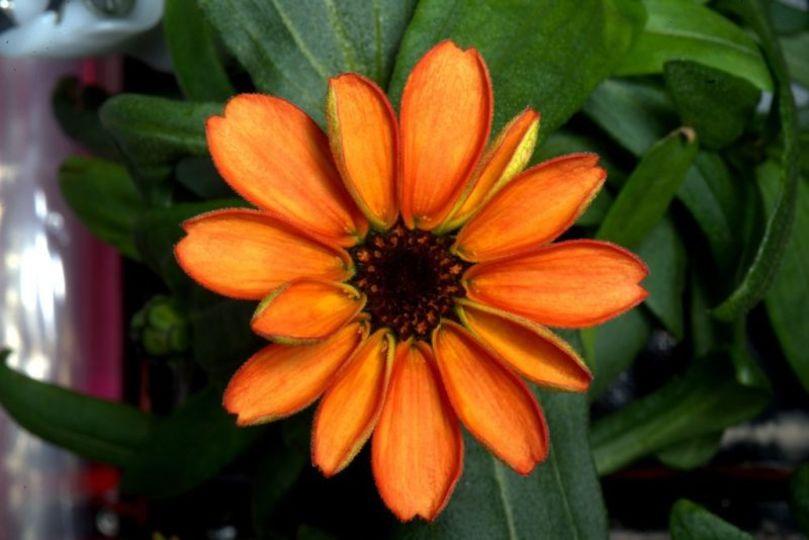 宇宙に一つだけの花