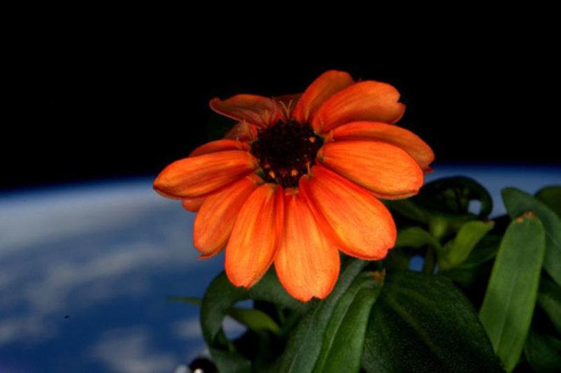 マニュアルは捨てろ! 宇宙で初の花を咲かせたのは判断力