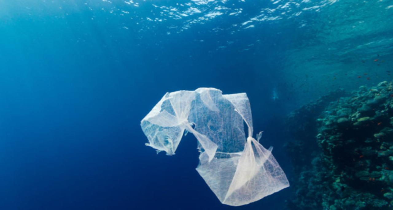 2050年までには魚よりもプラスチックのほうが海でたくさん泳ぐようになります