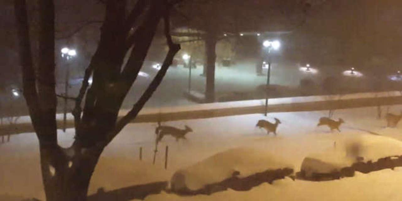 アメリカの大雪で、動物たちがおおはしゃぎ