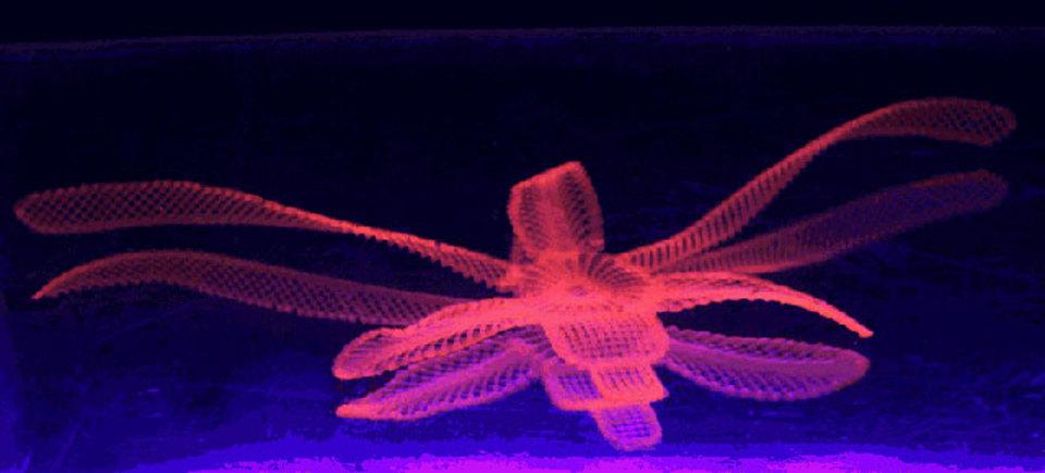 将来の人工細胞? 「4D」プリントされた花