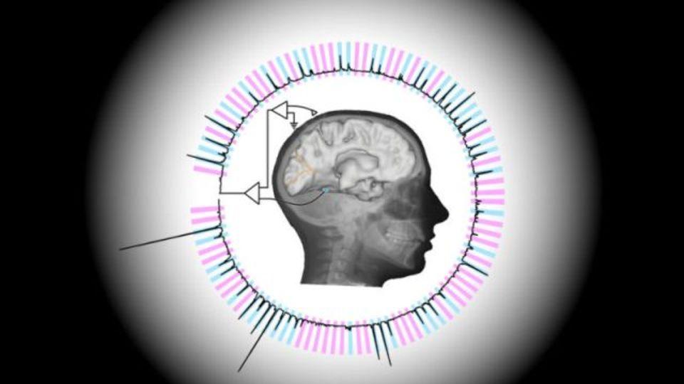 脳から心を読む。正解率96%、見ているものをリアルタイムで推定
