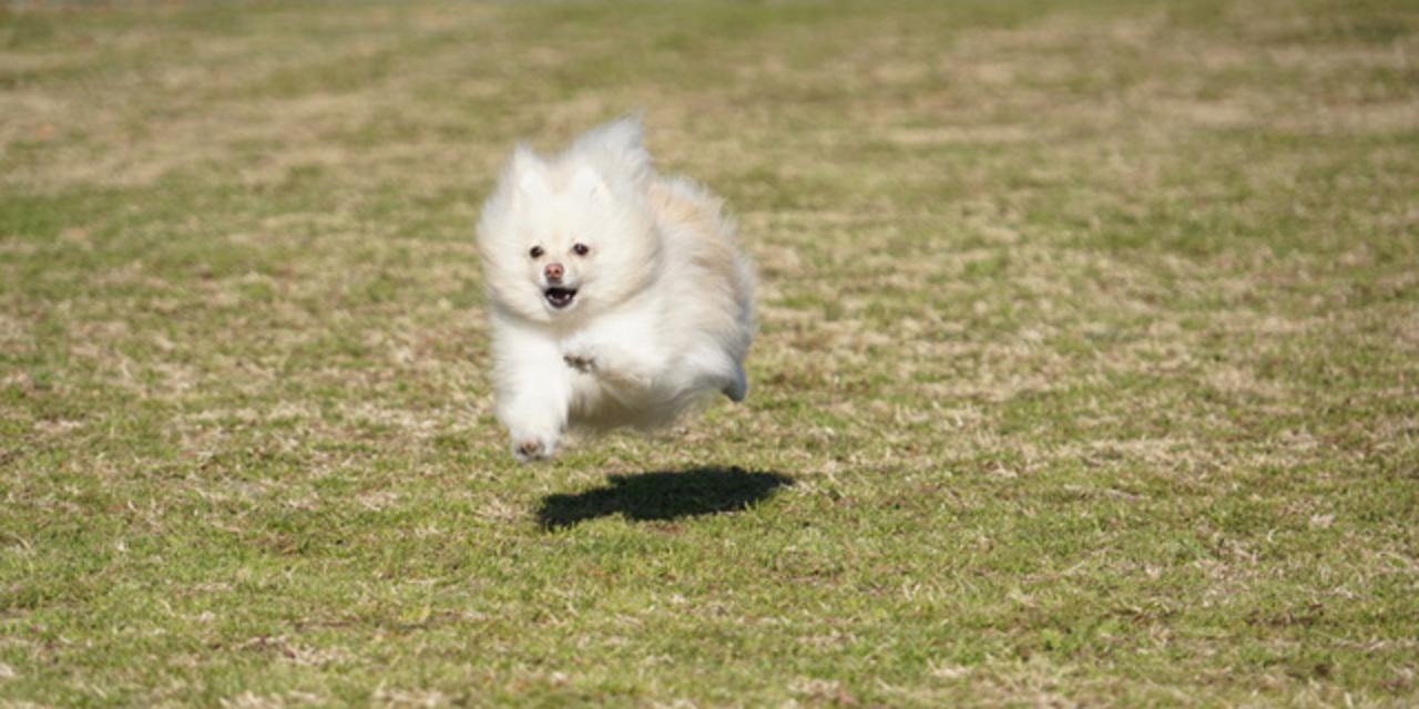 飛行犬 vs 猫パンチ! 「いいね!」入れ食いの悶絶写真の撮り方は?