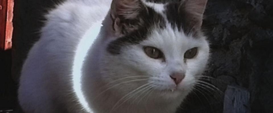 なんだこれ? タイムズスクエアで流れる巨大なネコ動画