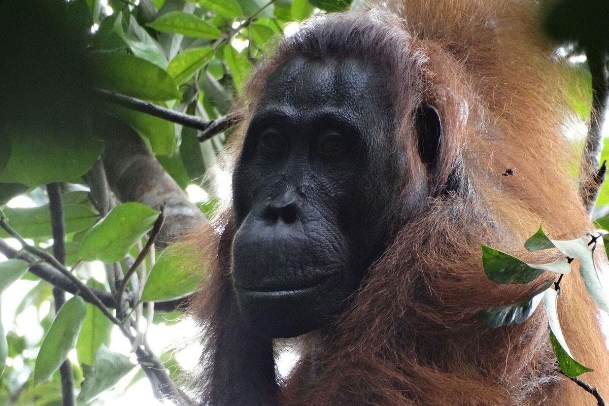 160205_orangutans.jpg