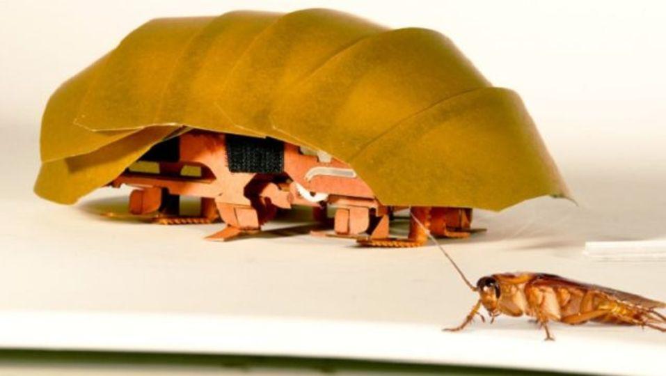 【閲覧微注意】ゴキブリのしたたかさを、災害救助用ロボットに