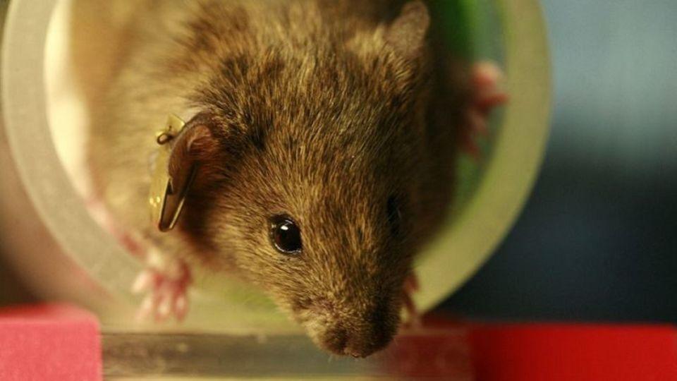 ネズミはどんな動画が好きかを実験した結果