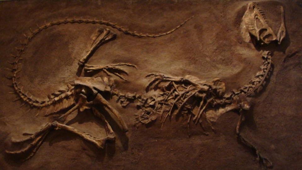 いまだかつてないほどケガした恐竜の化石が見つかる