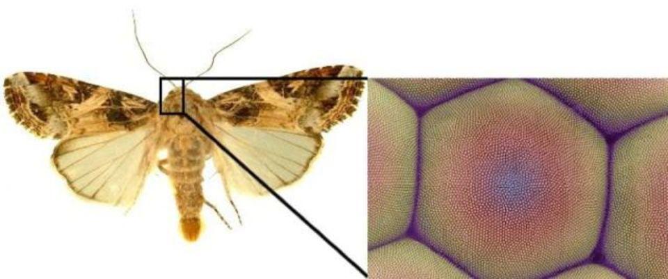 グラフェンを蛾の目みたいにしたら、壁紙で太陽発電ができるかも