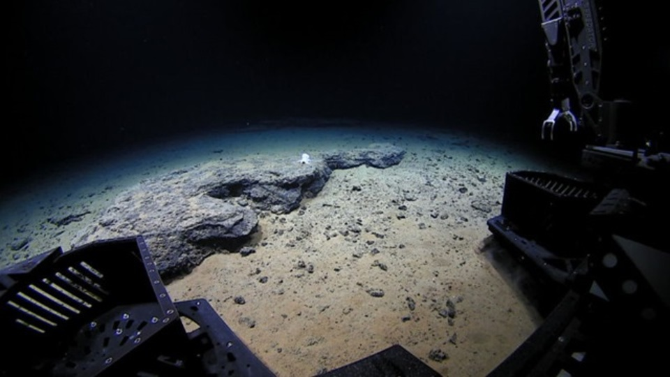 新種?霊?タコがいるはずのない海底4,200mにタコ