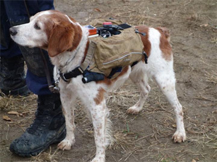 サイバー救助犬、GPSとカメラつきの「ハイテクスーツ」で捜索状況をリアルタイムに送信