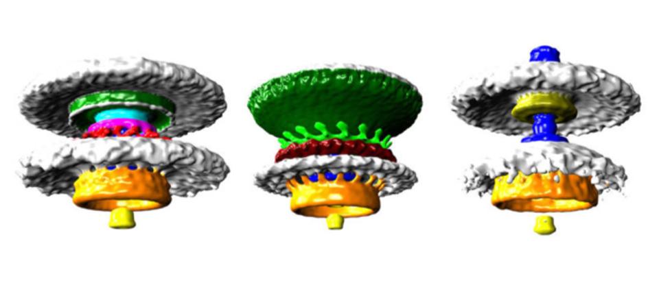 微生物が持つべん毛モーター、その姿が初めて詳細まで捉えられました