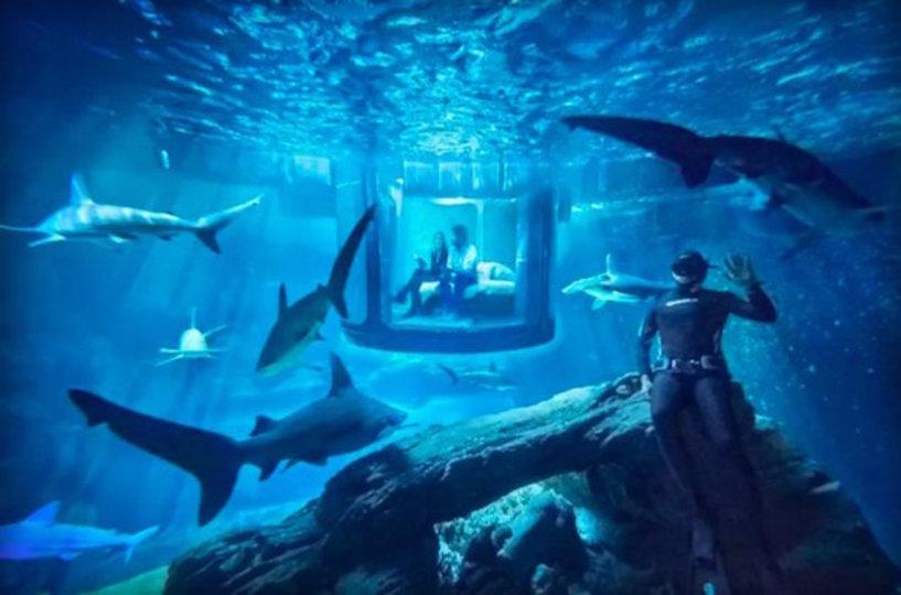 水中からサメが見られるベッドルーム、泊まりたい?