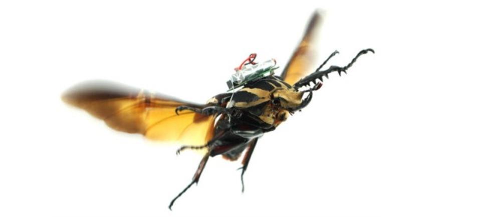 いやー...こ、これって倫理的にアリなの? 昆虫に電極を埋め込んでドローン化する技術が成功