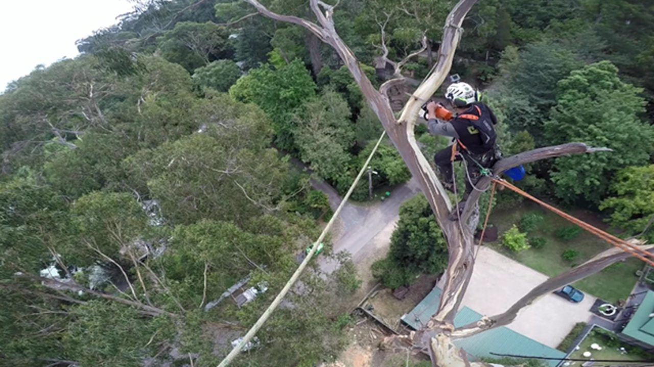 巧みすぎて見入ってしまう、大木を切る職人動画