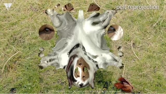 VFX CG 犬