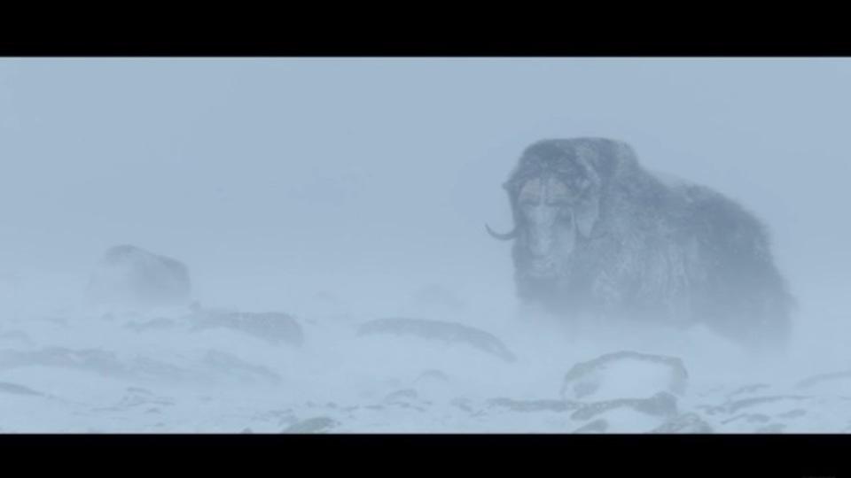 マンモスとともに氷河期を生きた動物に迫ったドキュメンタリー。いまもなお氷河期は続いている...
