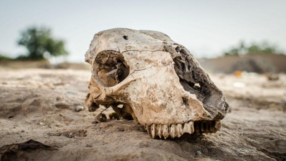 今人類が向かいつつある、5600万年前に起きた「未来」とは?