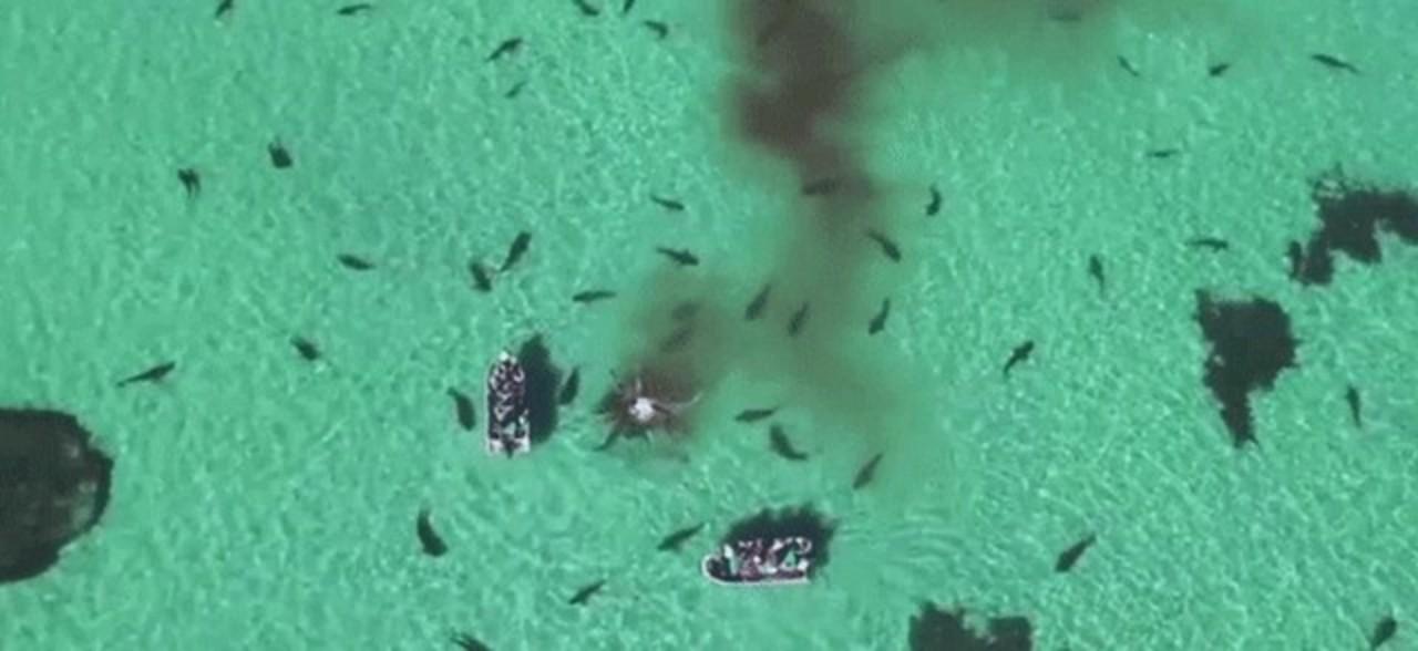 70頭ものサメがクジラを捕食する姿をドローンが空撮