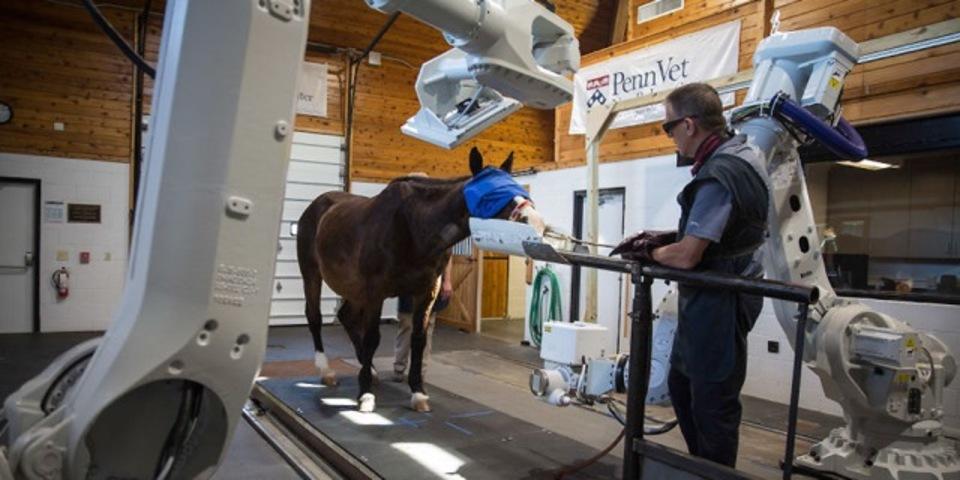 CTスキャンがロボットアーム式になって競走馬にずっと優しくなりました