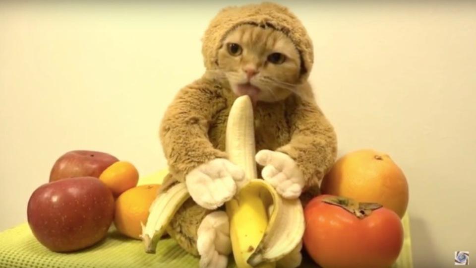 中国、インターネット上の「卑猥にバナナを食べる映像」を禁止に