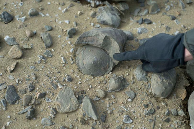 7100万年前の生物の化石が南極で発掘